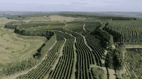 Dona Irani: pure Arabica coffee with sustainable agriculture