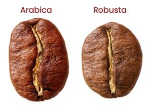 comparison of arabica and robusta coffee beans